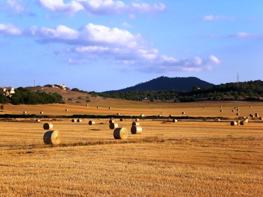 A_Mallorca6