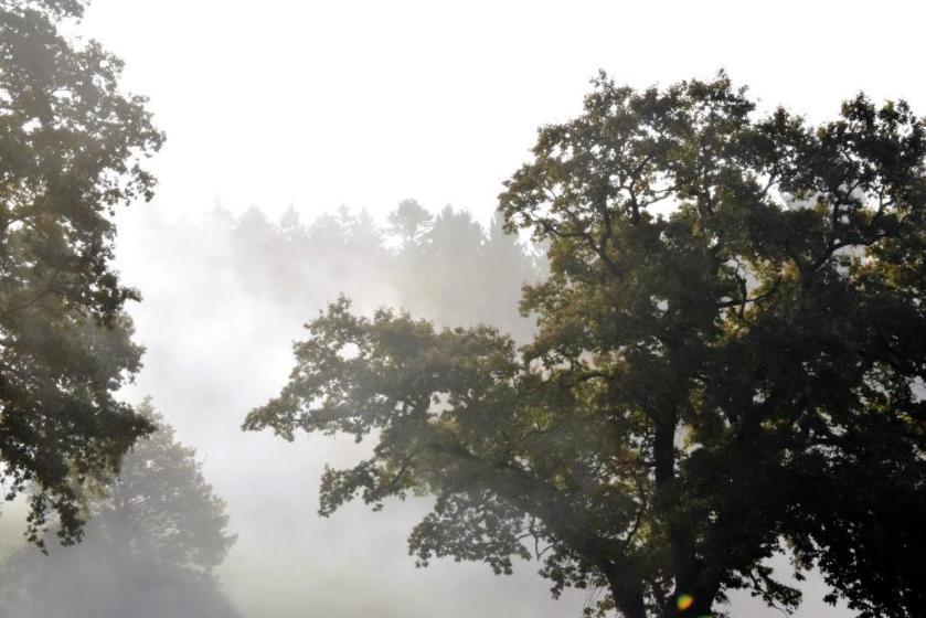 Unterfreundenblog Woche in Bildern Bäume im Nebel
