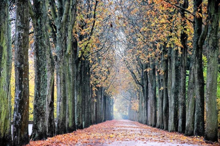 Unterfreundenblog Die Woche in Bildern November Rain Schlosspark Schwetzingen