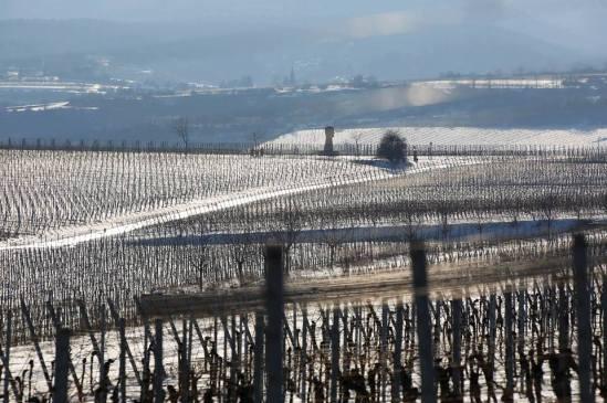 Unterfreundenblog Wochenendtipps Rotweinwanderung Freinsheim Korrekt