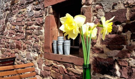 Unterfreundenblog Wochenendtipps Plant-a-flower-day