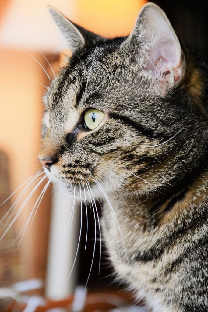 Mr. Grey / Cat & Blogmuse Unterfreundenblog