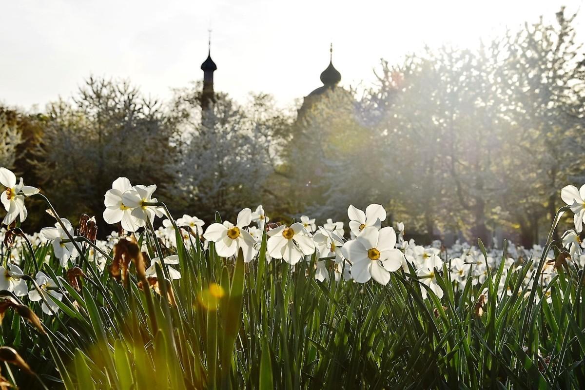 Wochenendtipps 12.-14.05.2017 (Rhein-Neckar-Region)