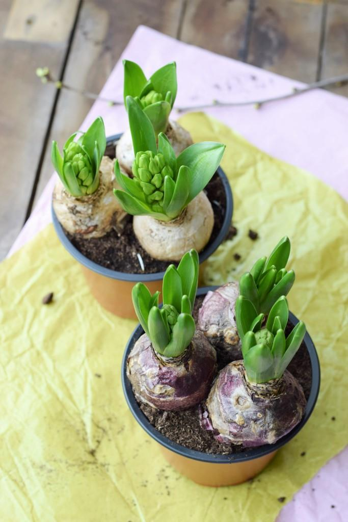 DIY Hyazinthen in Wachs - Frühlingsdeko in Pastell - Unterfreundenblog