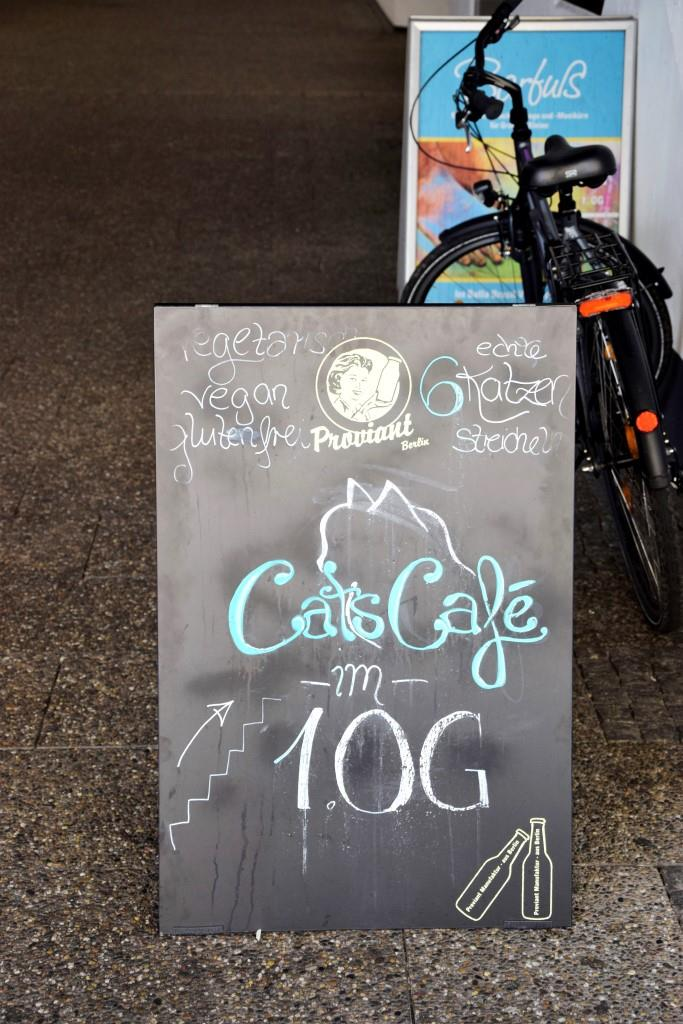 Treppe hoch auf einen Kaffee mit Katze - im Cats Café Karlsruhe