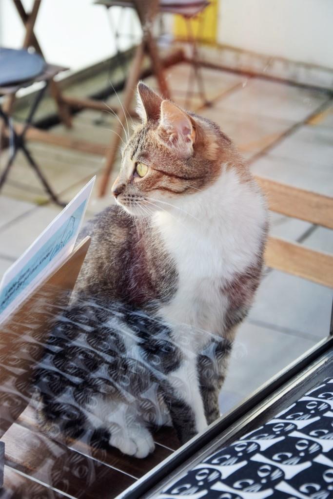 Bei schönem Wetter geht's auf die Terrasse - zum Sonnen und Spielen - im Cats Café Karlsruhe