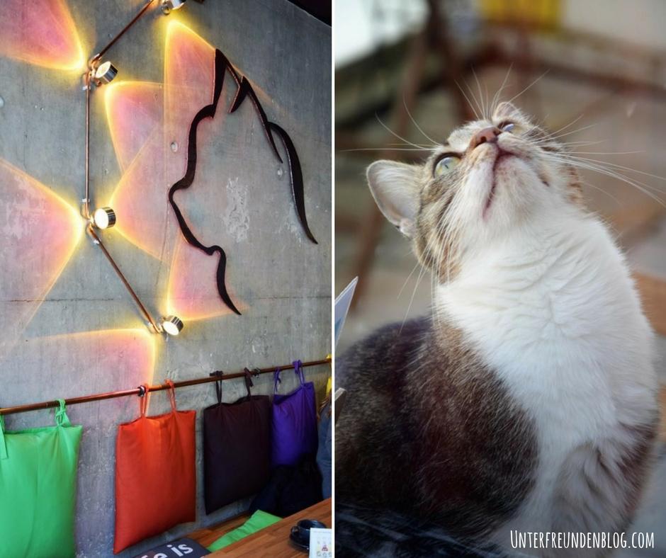 Mein Besuch im Katzencafé Cats Café in Karlsruhe. Tierisch nett und zum Schnurrenlecker!