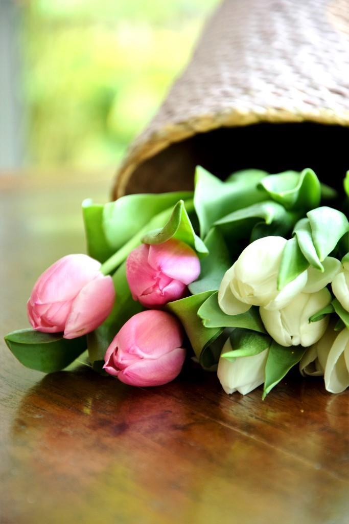 Frühlingsboten Tulpen in Pink und Weiß