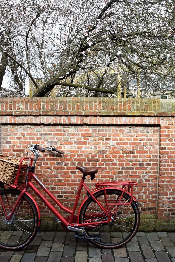 Typisch Holland! Fahrrad, Backsteinwand und die ersten Frühlingsblüten