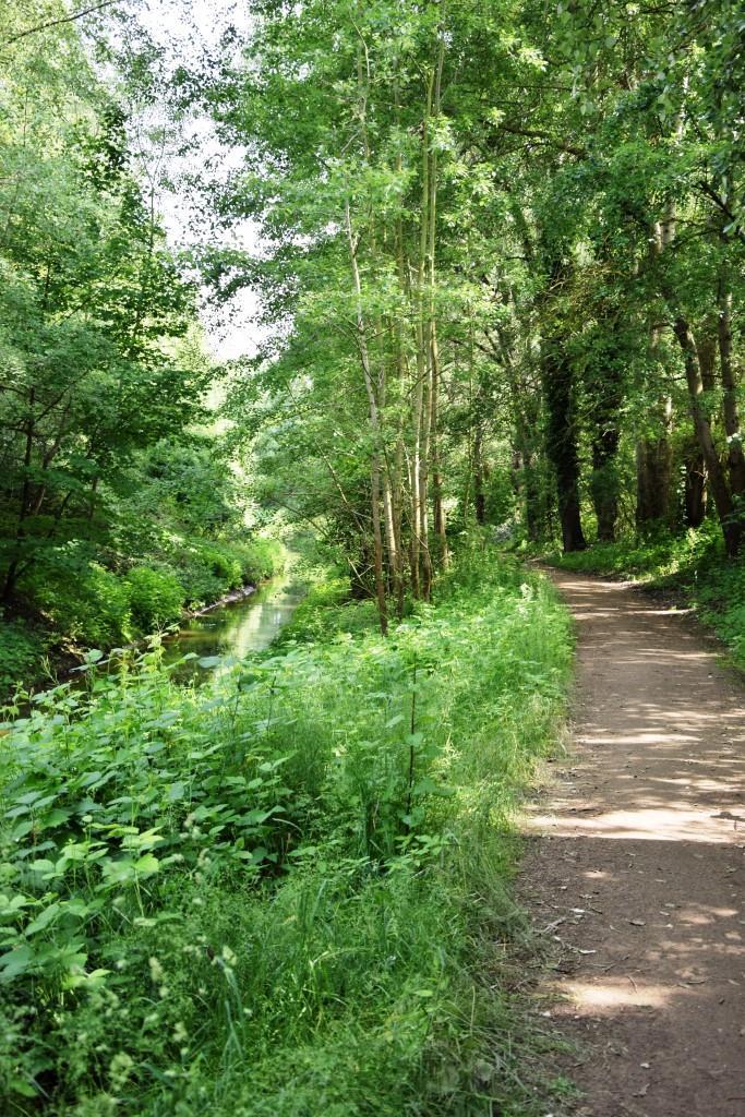 Endspurt! Durch schattige Wälder geht's in Richtung Schwetzingen