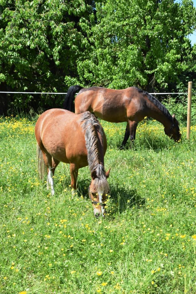 Idylle pur im Kraichgau - Pferdeweiden entlang der Leimbachroute
