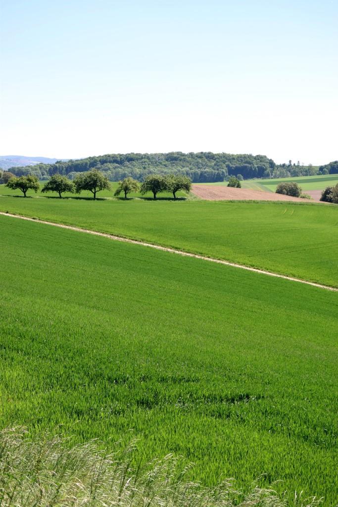 Die sanften Hügel des Kraichgau aka als mörderische Bergetappe auf Kilometer 1!