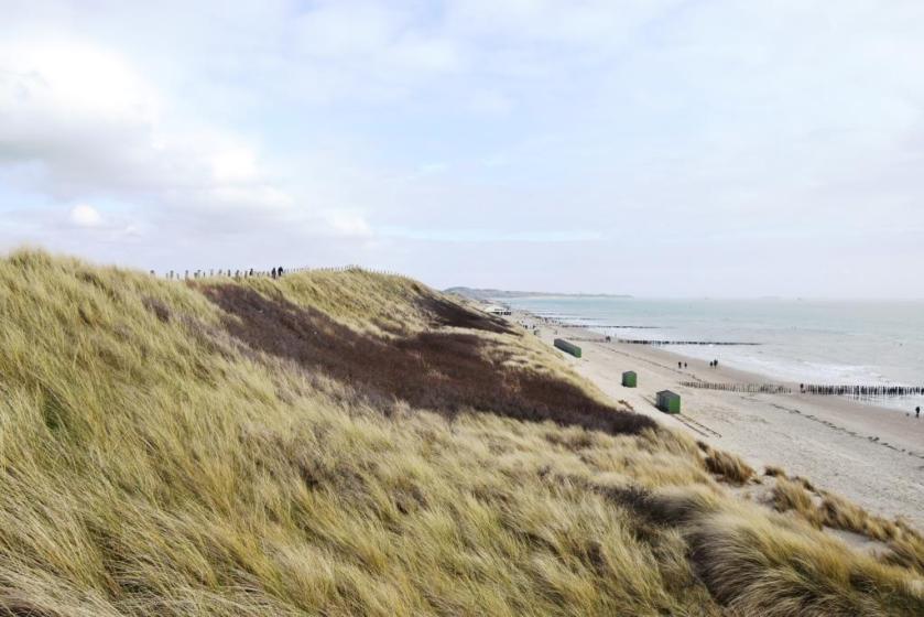 Große Hollandliebe auf den ersten Blick!