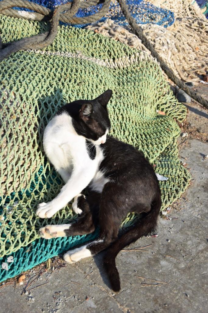 Wann gibt's denn endlich Fisch? Katze bewacht das Fischernetz im Hafen von Cala Figuera