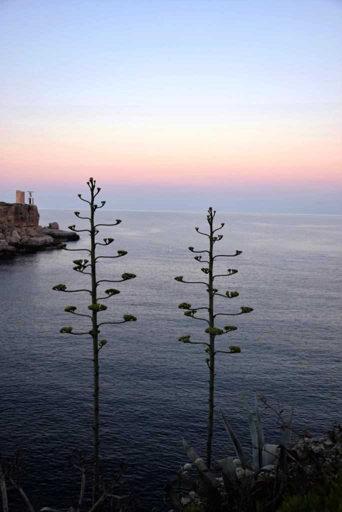 Hach ... Morgenstimmung in der Bucht von Cala Figuera