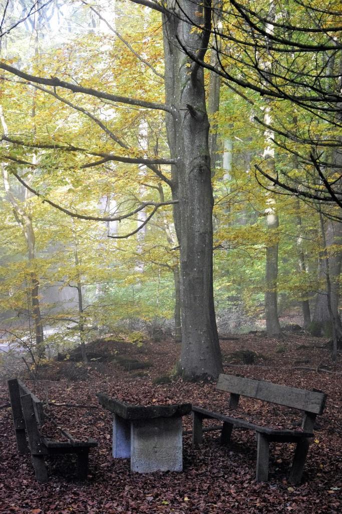 Hach, so schön - der Wald im Herbst!