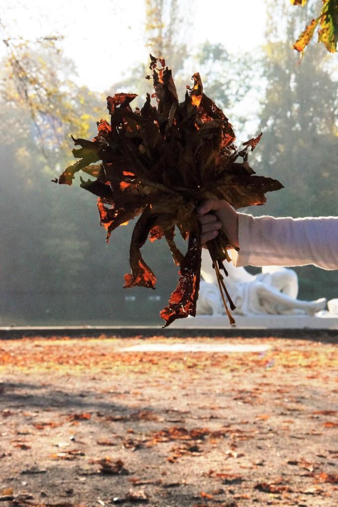 Herbst, ich mag Dich! Herbstspaziergang im Park - ein Muss auf der Fall Bucket List!