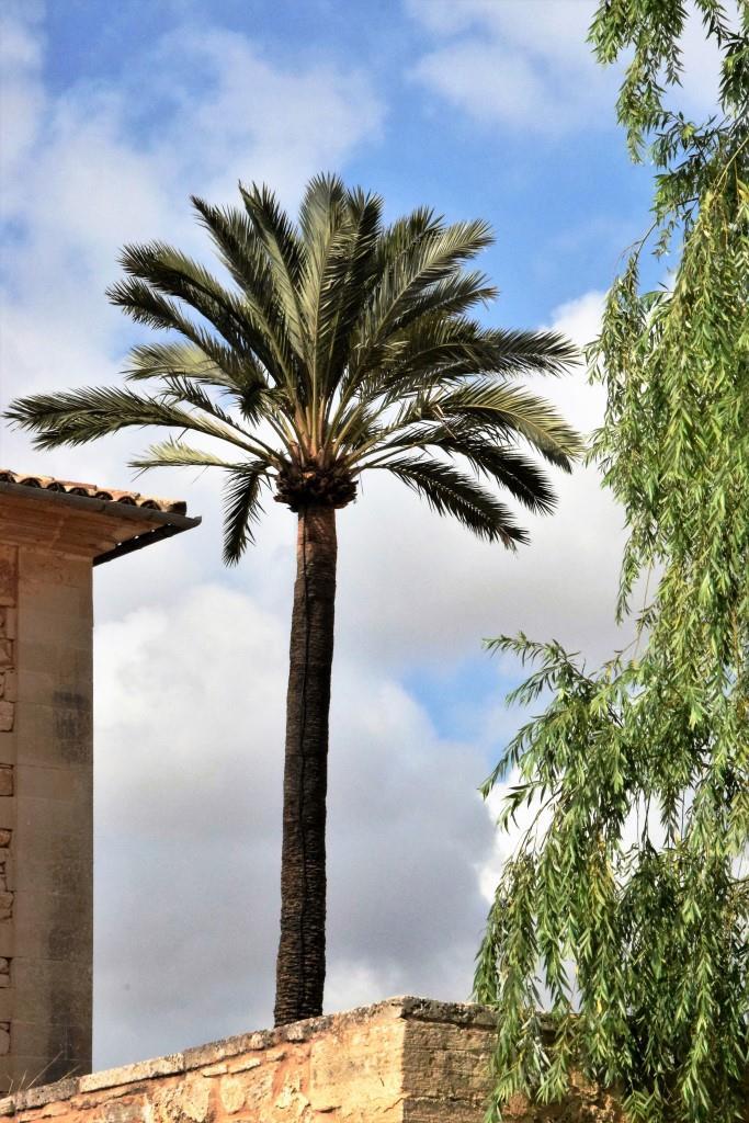 Unter Palmen - Santanyi Mallorca