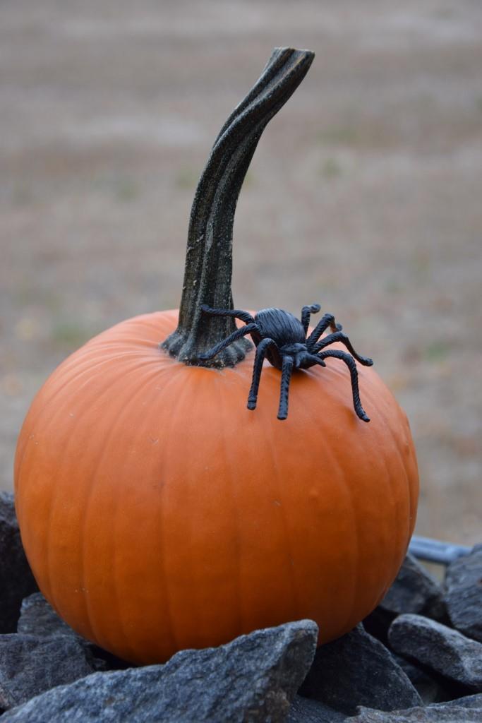 Kein Halloween ohne Kürbis - hier dekoriert mit fetter Spinne