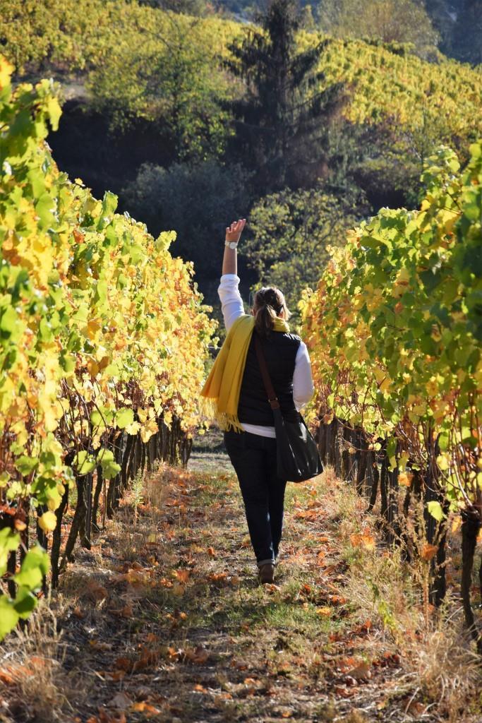 Weinberg statt Wein! Eine Weinbergpatenschaft ist die geniale Geschenkidee für Foodies und Genießer