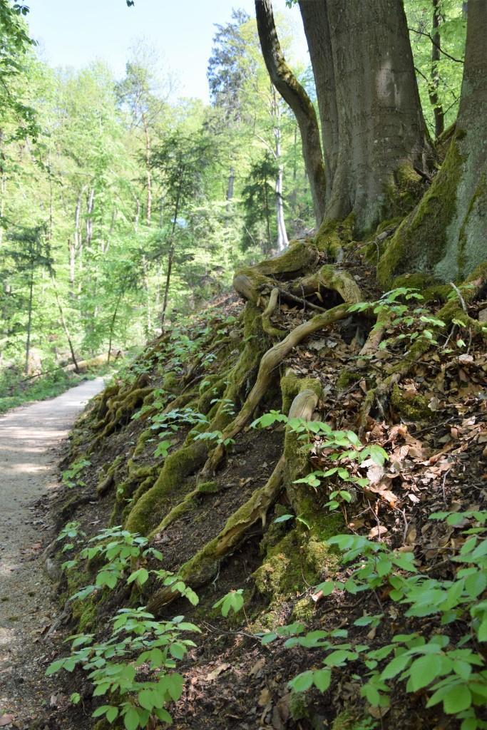 Der Rückweg durch den schattigen grünen Wald ist so viel schöner als Treppensteigen!
