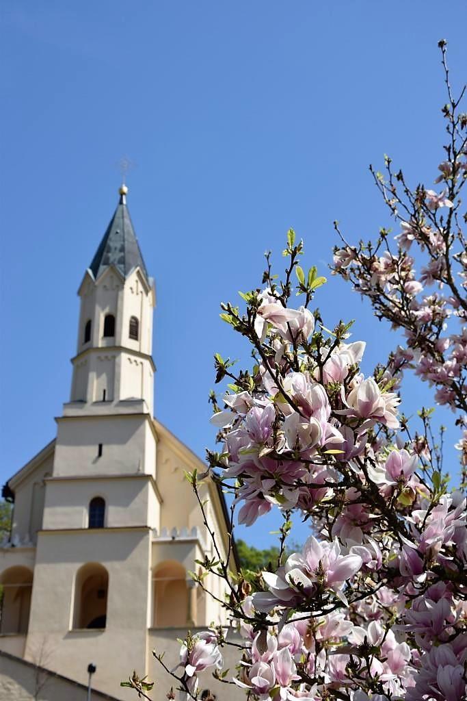 Kirchturm bei Regensburg und Magnolienbaum