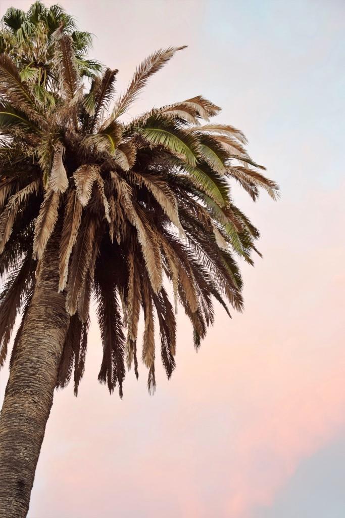 #Palme #Sardinien #Italien