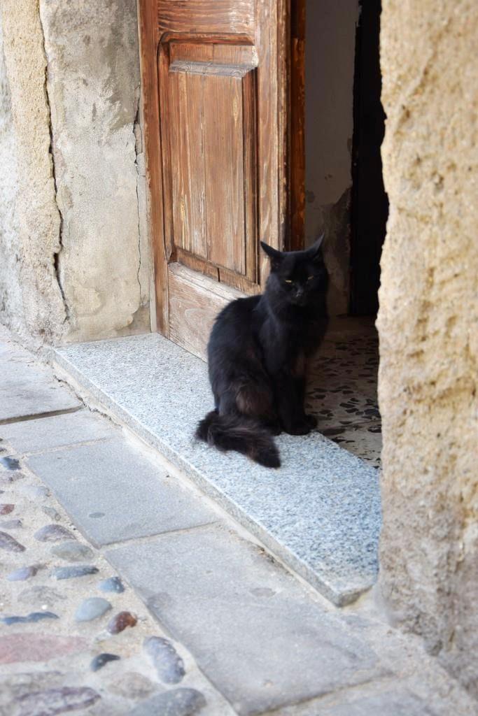 Katze Sardinien Altstadt