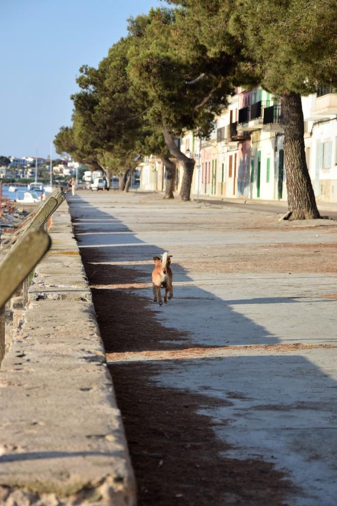 Hund Straße Mallorca