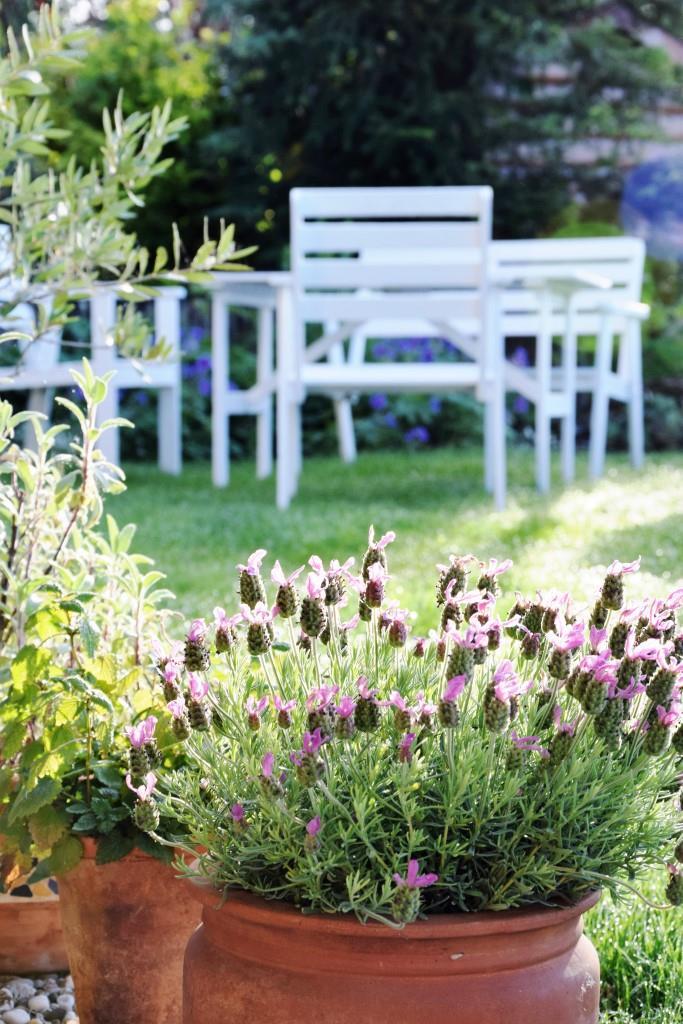 Sommergarten Lavendel Weiße Holzmöbel