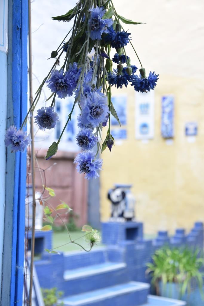 Alles Blau im Hof