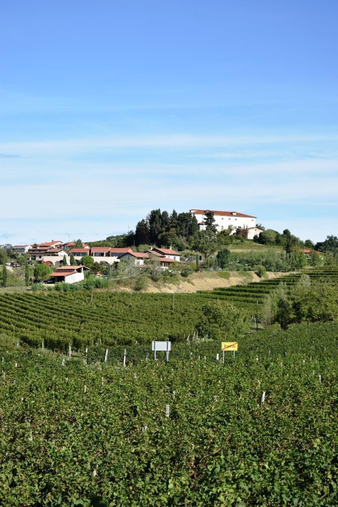 Weinland Brda Slowenien