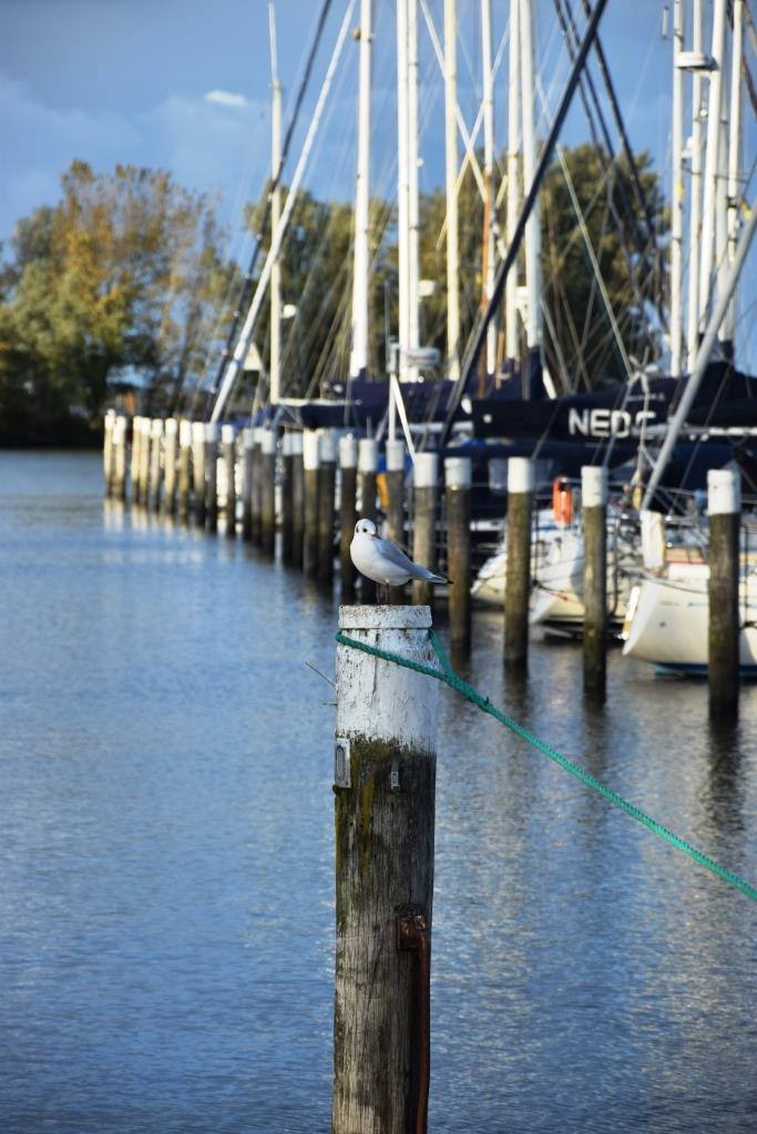 Holland Hafen Segelboote