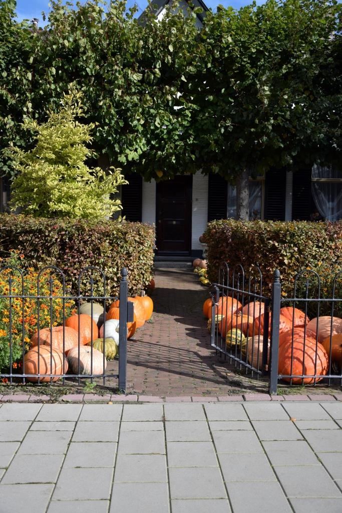Kürbis Dekoration Vorgarten