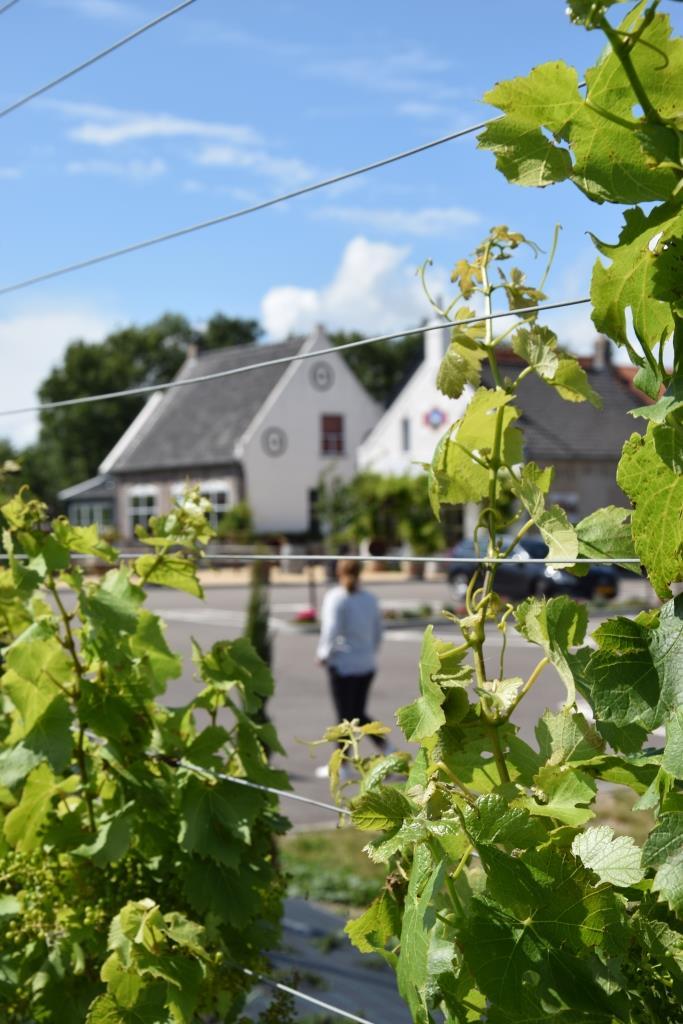 Weingut Zeeland Holland