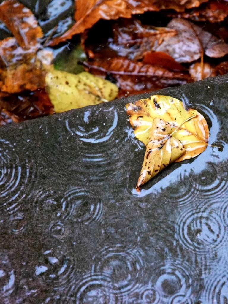 Blätter Regen Straße