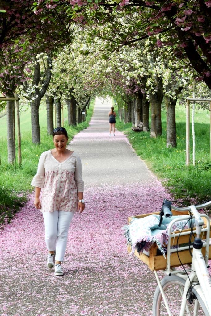Radtour Kirschblüte Allee