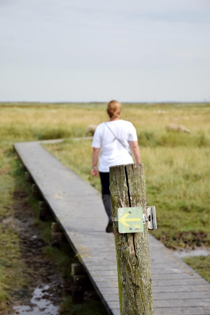 Über Planken geht's auf dem Wanderweg auf eigene Faust durch das Versunkene Land in Zeeland